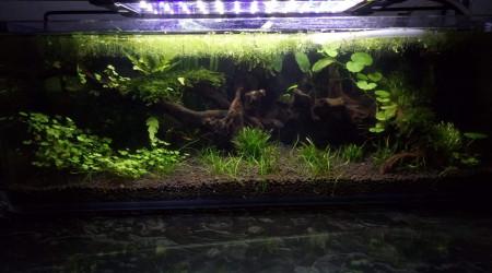 aquarium Blau 17l
