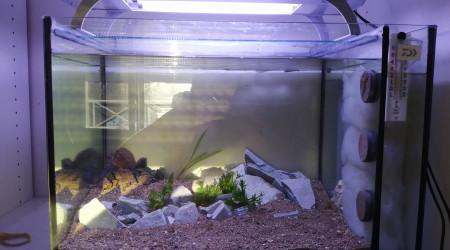 aquarium 83 littres