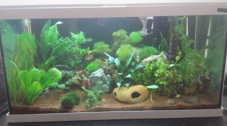 aquarium mon aqua 50l