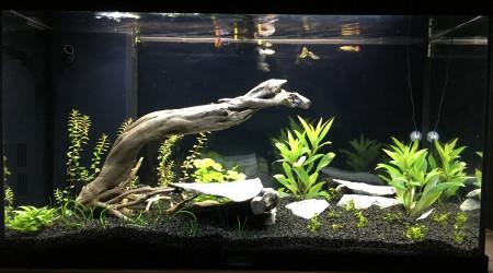aquarium JUJU120