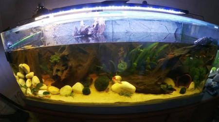 aquarium Aquaterra