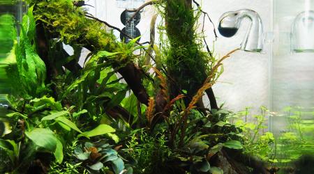aquarium Nano 20L aquascaping