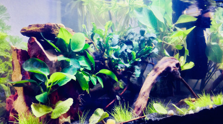 aquarium Nano Aquarium 20.4L