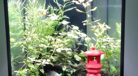 aquarium 96 L