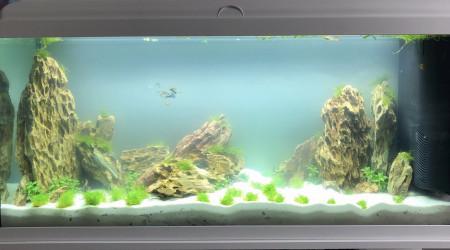 aquarium Aquarium Polo