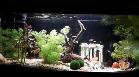 aquarium 16-9