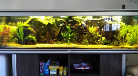 aquarium Aquarium Thailandais