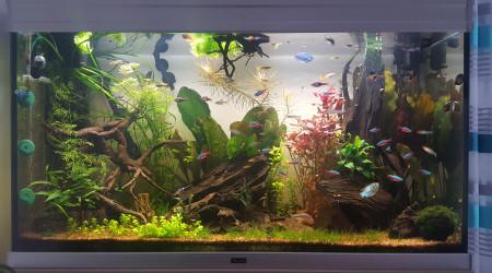 aquarium Aquarium 200