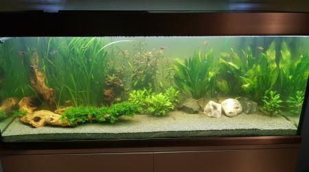 aquarium Proxima 325