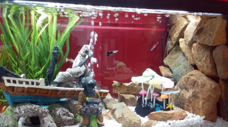 aquarium 48 litres