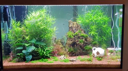 aquarium EHEIM_incpiria_330