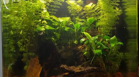 aquarium Crevette 30L