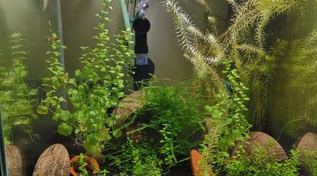 aquarium Blue Velvet