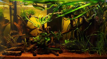 aquarium Amazone