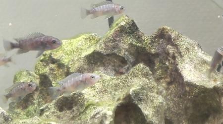 aquarium Nurserie