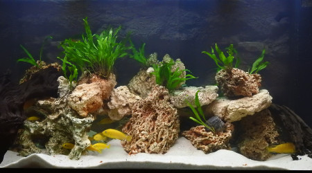 aquarium Bac 360L Malawi