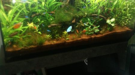 aquarium Bambou
