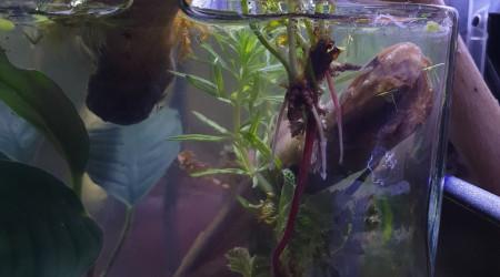aquarium Aqua Forest