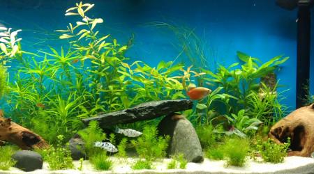 aquarium hobbit17