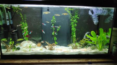 aquarium Grande communauté