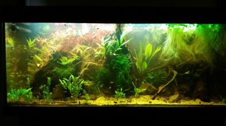 aquarium Communautaire 240L