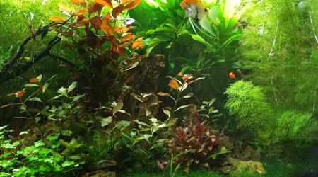 aquarium ep