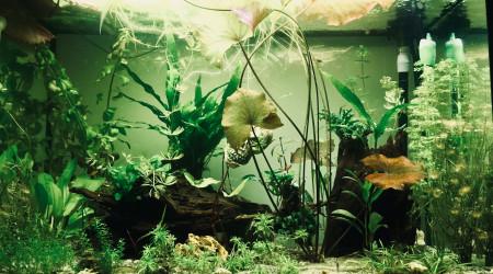 aquarium Askoll