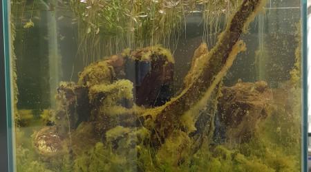 aquarium Nano Low-tech pour mon bureau