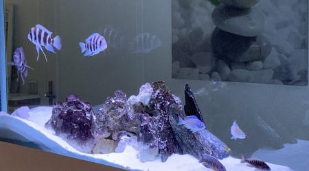 aquarium Cyclidés africains 800