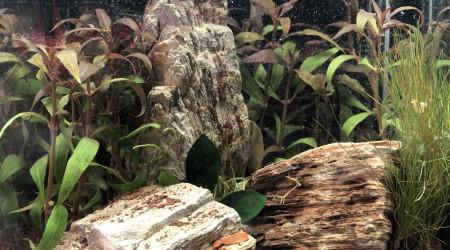 aquarium Nano 10 L bureau