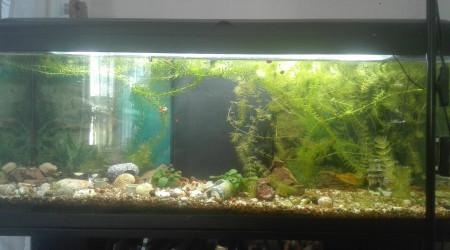 aquarium Le 110 Lts