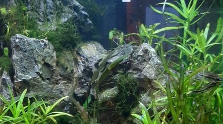 aquarium AQUASCAPE 10 L