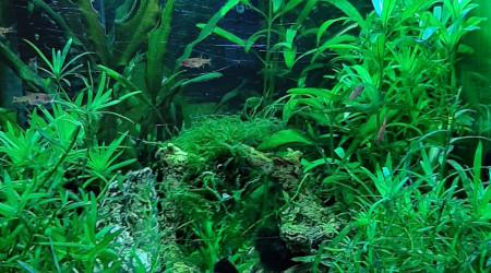 aquarium Nano 30 litre