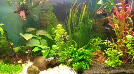 aquarium MollyLand