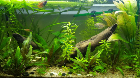 aquarium Premier bac