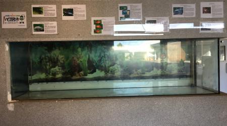 aquarium Aquarium du lycée