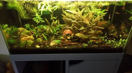 aquarium 50 litres asiatique