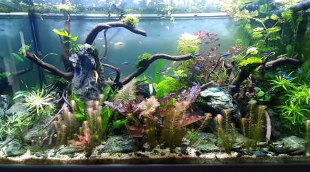 aquarium aquatlantis fusion 100