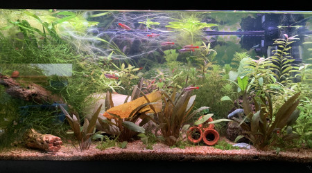 aquarium Low tech 60l