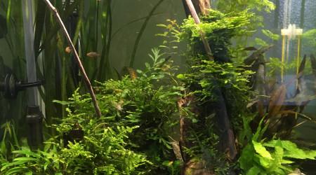 aquarium Nano cube 60l