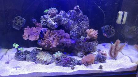 aquarium Red sea reefer 250