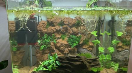 aquarium Nanocube 60L