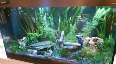 aquarium AquaCiano200