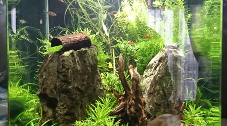 aquarium Nano Cube 60