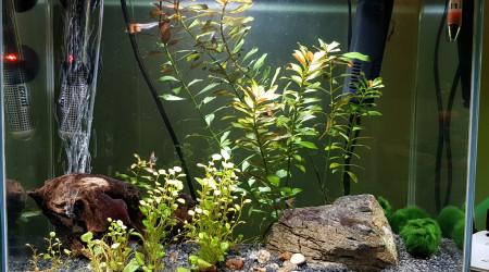 aquarium Aquarium 1
