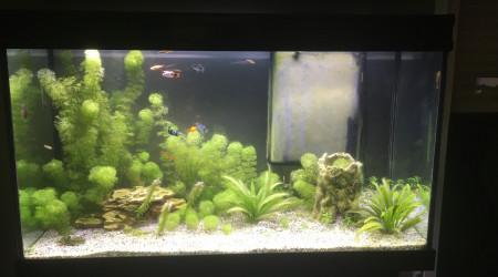 aquarium Biotope communautaire