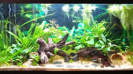 aquarium Aqua 01