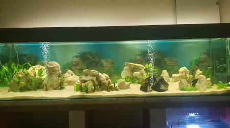 aquarium 1000 litres
