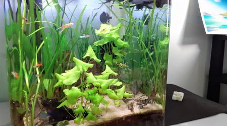 aquarium Guppy Endler