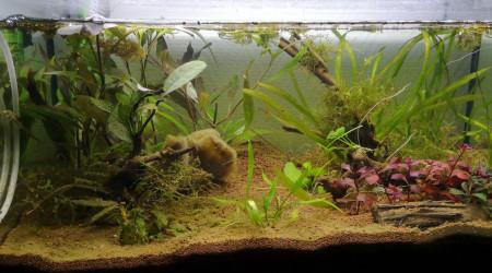 aquarium 60l betta